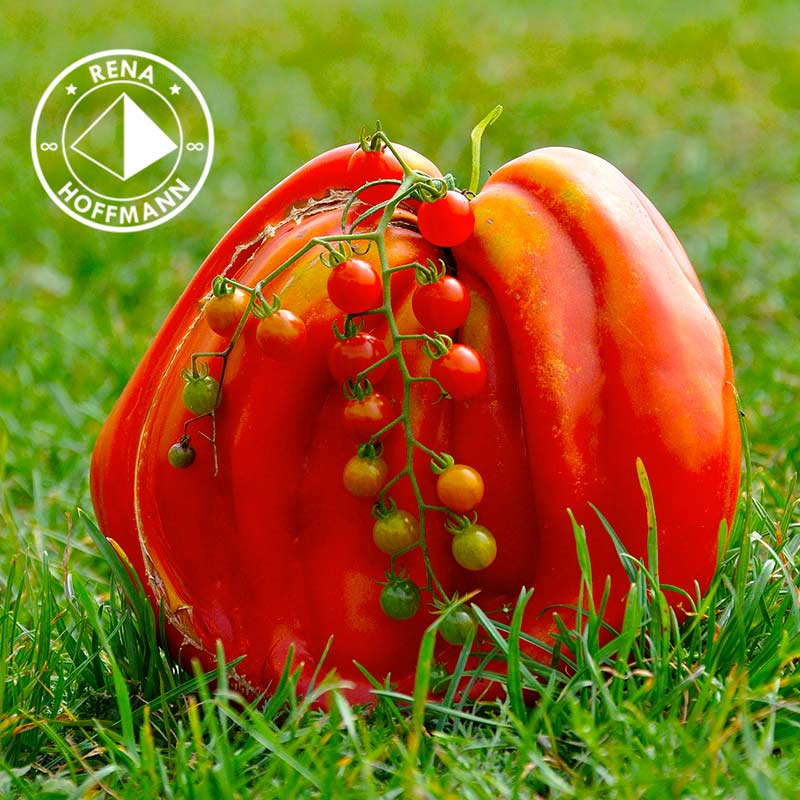 Tomatenmutter