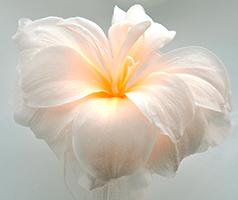 amaryliss-foto-rena-hoffmann